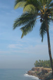 Palm Trees on the Cliff Varkala 02