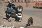 Piglet and Moped Bijapur