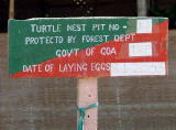 Turtle Nest