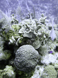 Selection of Hard Coral