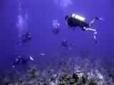 Divers Ahoy
