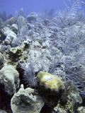 Coral at Boneyard