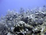 Hard and Soft Coral at Boneyard