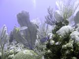 Underwater Scene at Boneyard