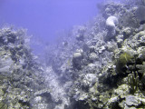 Boneyard Pine Cay