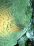 Hard Coral Close up