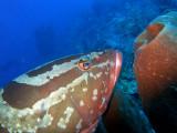 Grouper and Sponge