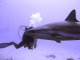 Shark in Front of Diver - Bloody Shutter Lag