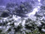 Swimming Shark 2