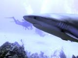 Close Encounter With Shark