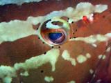 Groupers Eye 1