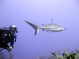 Shark Swimming By