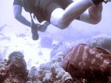 Grouper Following Diver