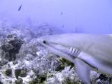 Close Encounter With Shark 2