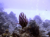 Freindly Grouper 4