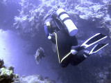 Diver and Grouper 2