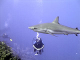 Watching a Shark 4