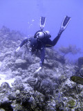 Diver and Grouper 3