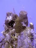 Hard Coral Soft Coral & Sponge
