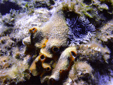 Hard Coral and Anemone