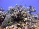 Selection of Coral at Magic Mushroom