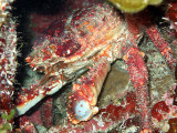 Crab in a Crevice 1