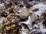 Octopus at Eel Garden 2