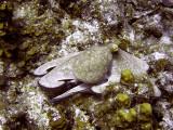 Octopus at Eel Garden 3