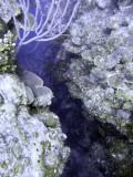 Crevice at Eel Garden