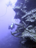 Diver on a Wall at Eel Garden 2