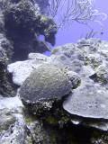 Mostly Hard Coral Eel Garden