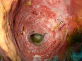 Two Cleaner Fish Inside Sponge