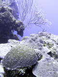 Selection of Coral at Chimney
