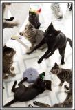 Gummi Cats - December 2005