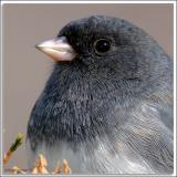 chickadee-fullcrop_D2X_3587.jpg
