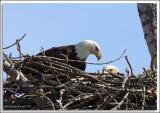 Eagle-Nest_D2X_4365.jpg