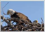 Eagle-Nest_D2X_4372.jpg
