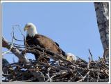 Eagle-Nest_D2X_4375.jpg