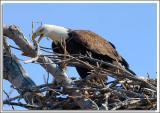 Eagle-Nest_D2X_4376.jpg