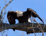 Eagle-Nest_D2X_4449.jpg