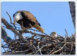 Eagle-Nest_D2X_4380.jpg