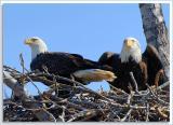 Eagle-Nest_D2X_4382.jpg