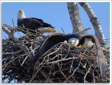 Eagle-Nest_D2X_4386.jpg
