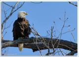 Eagle-Nest_D2X_4411.jpg