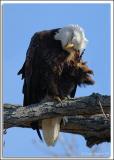 Eagle-Nest_D2X_4426.jpg