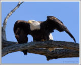 Eagle-Nest_Ret_D2X_4449.jpg