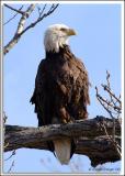 Eagle-Nest_D2X_4432.jpg
