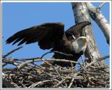 Eagle_D2X_4689.jpg