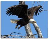 Eagle_D2X_4692.jpg