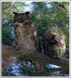 Owl_D2X_5371.jpg